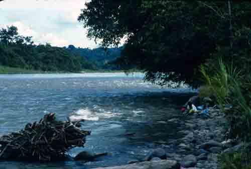 Bank of the Rio Napo in the Amazon rainforest.