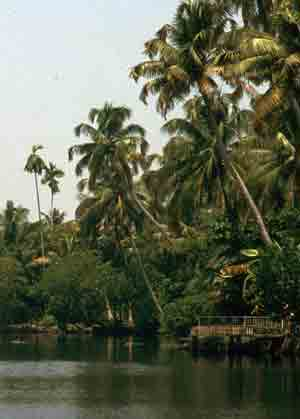 Coconut and Waterways in Kerala