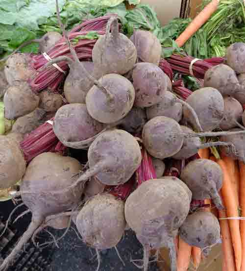 Beets-cropped-B